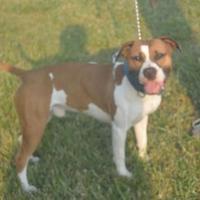 Adopt A Pet :: Braxton - Prole, IA