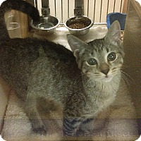 Adopt A Pet :: NORMAN - Springfield, PA