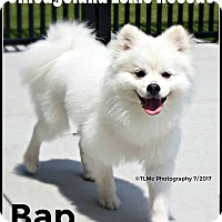Adopt A Pet :: Bap - Elmhurst, IL