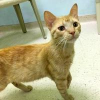 Adopt A Pet :: Bodacious - Janesville, WI