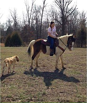 Pony - Other Mix for adoption in PRINCETON, Kentucky - PURTY