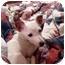 Photo 2 - Jack Russell Terrier Mix Dog for adoption in Harrah, Oklahoma - Travler