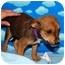 Photo 2 - Shepherd (Unknown Type) Mix Puppy for adoption in Broomfield, Colorado - 1Leonardo