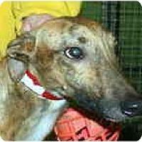 Adopt A Pet :: Dexter (
