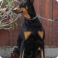 Adopt A Pet :: Roxy - Sun Valley, CA