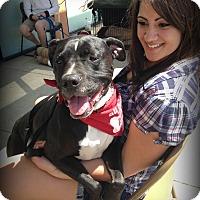 Adopt A Pet :: PRINCESS - Ojai, CA