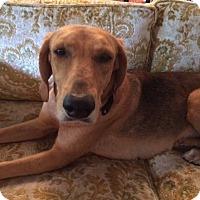 Adopt A Pet :: Genie - Edisto Island, SC
