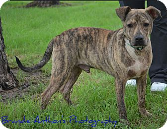 Terrier (Unknown Type, Medium) Mix Dog for adoption in Cat Spring, Texas - Chance