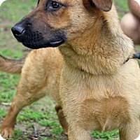 Adopt A Pet :: JUNIE - Waterbury, CT