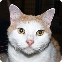 Adopt A Pet :: Riley - North Branford, CT