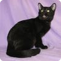 Adopt A Pet :: Nyssa - Powell, OH
