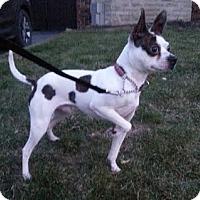 Adopt A Pet :: Spot - Hamilton, ON