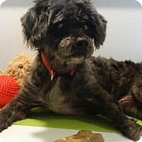 Adopt A Pet :: Tinker - Vacaville, CA