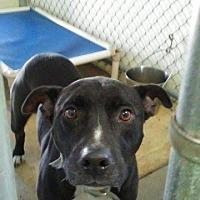 Adopt A Pet :: Jax - Lagrange, IN
