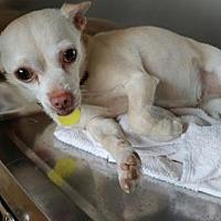 Adopt A Pet :: Lovie - Colfax, IL