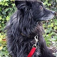 Adopt A Pet :: Blackie / Otto - Encino, CA