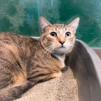 Adopt A Pet :: Eric - Wantagh, NY