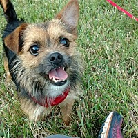 Adopt A Pet :: Chester - Greensboro, MD