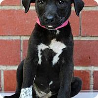 Adopt A Pet :: Ellie - Waldorf, MD