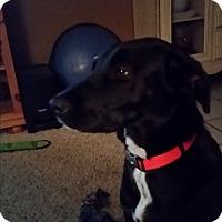 Labrador Retriever Dog for adoption in Buchanan Dam, Texas - Lila