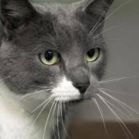 Adopt A Pet :: Junior - Newton, KS