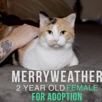 Adopt A Pet :: Merryweather - Wichita, KS