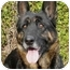 Photo 1 - German Shepherd Dog Dog for adoption in Los Angeles, California - Bonita von Kern