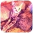Photo 1 - Oriental Cat for adoption in New York, New York - Delphine
