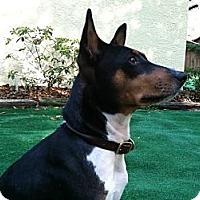 Adopt A Pet :: King - Seminole, FL