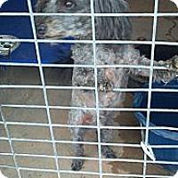 Adopt A Pet :: Mo - Childress, TX