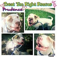 Adopt A Pet :: Prudence - Houston, TX