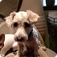 Adopt A Pet :: Mighty - Simi Valley, CA