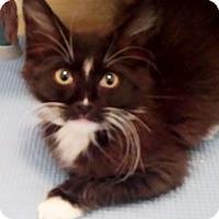 Adopt A Pet :: Trivet - North Highlands, CA