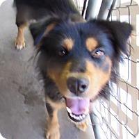 Adopt A Pet :: Flora - Edisto Island, SC