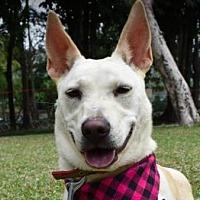 Adopt A Pet :: Mimi - San Ramon, CA