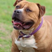 Adopt A Pet :: Biggs - Fresno, CA