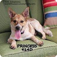 Adopt A Pet :: Princess - Spring, TX