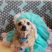 Adopt A Pet :: Ethel - Florence, KY