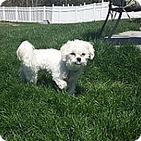 Adopt A Pet :: Davey Jones - Mt Gretna, PA