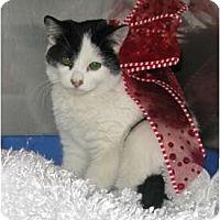 Adopt A Pet :: Myrrh - Washington Terrace, UT