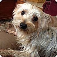 Adopt A Pet :: Poppy - Yakima, WA