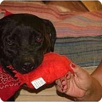 Adopt A Pet :: Ursula - Glastonbury, CT