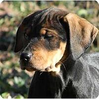 Adopt A Pet :: Winter Wonderland - Drifter - Dallas, TX