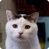 Adopt A Pet :: Clarendon - Chicago, IL