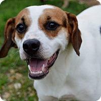 Adopt A Pet :: Burmeister - Bedminster, NJ