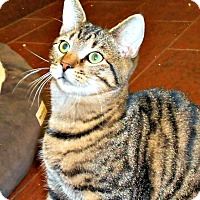 Adopt A Pet :: Randall - Chesapeake, VA