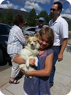 Chihuahua Dog for adoption in Denver, Colorado - Poncho