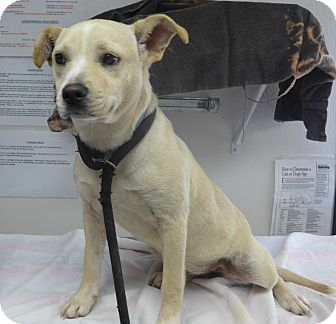 Terrier (Unknown Type, Small) Mix Dog for adoption in Manning, South Carolina - Honey