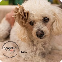 Adopt A Pet :: LEXI - Inland Empire, CA