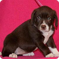 Adopt A Pet :: **JUICE** meet July 8th! - Mukwonago, WI